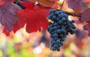 Vin Ligurie, visite guidée et dégustation
